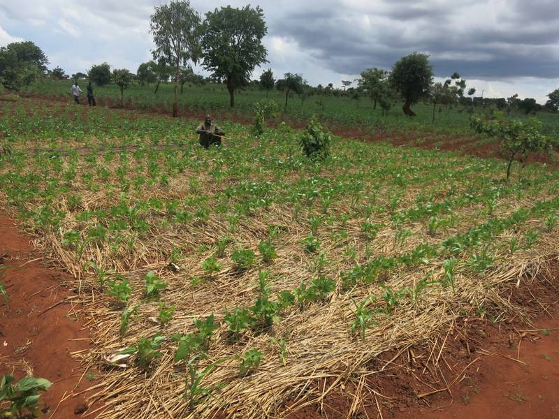 CSA Project Farmers Assess Soil Health